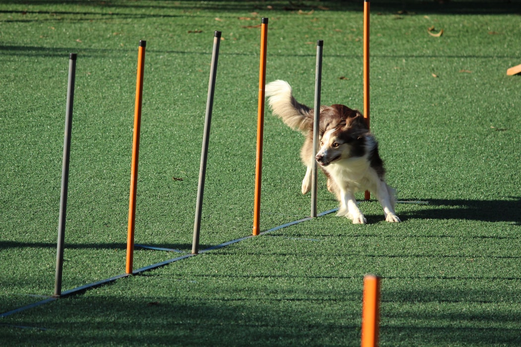 Hundesport für jede Rasse