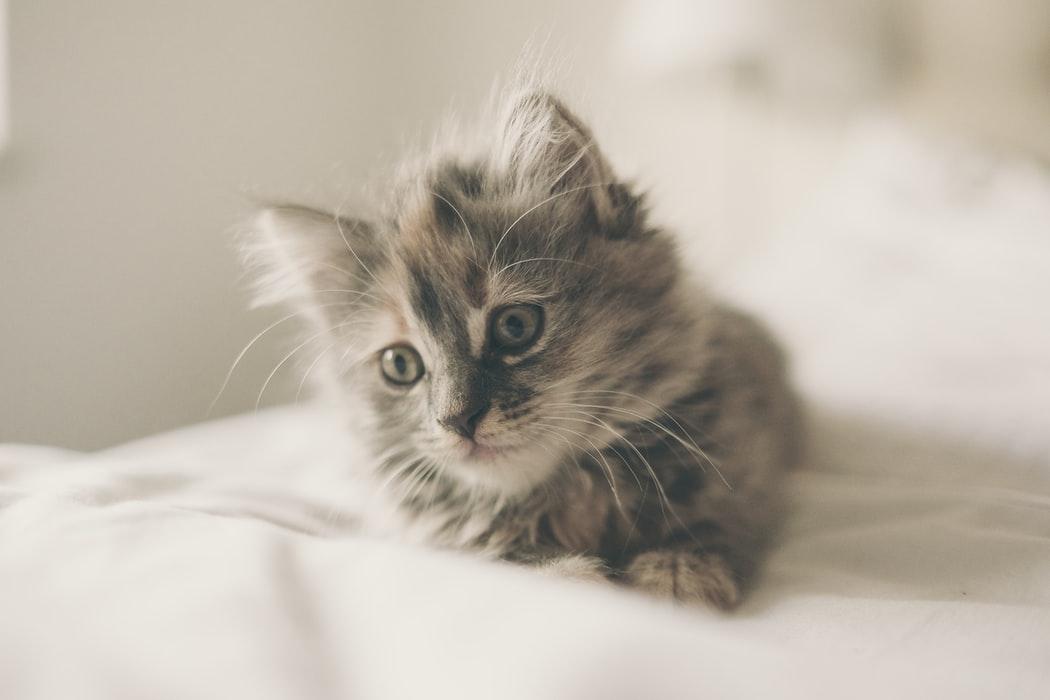 Katzentraining mit einem Clicker