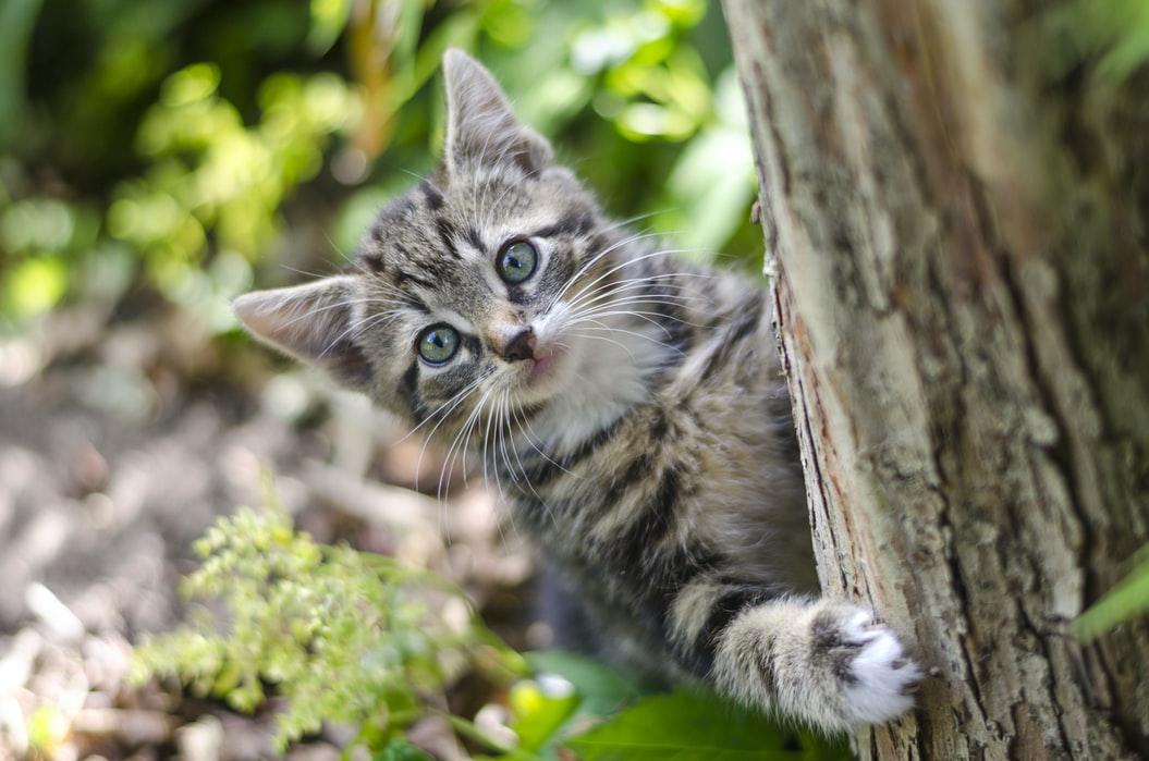 Können verwilderte Katzen gezähmt werden