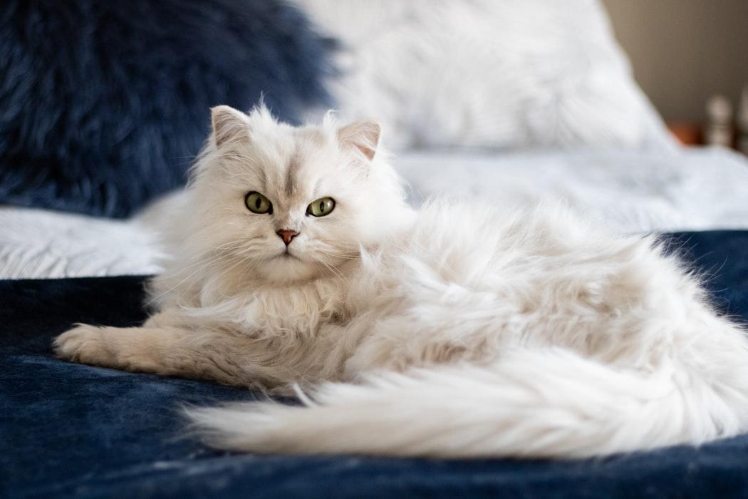 Tipps für das Baden deiner Katze