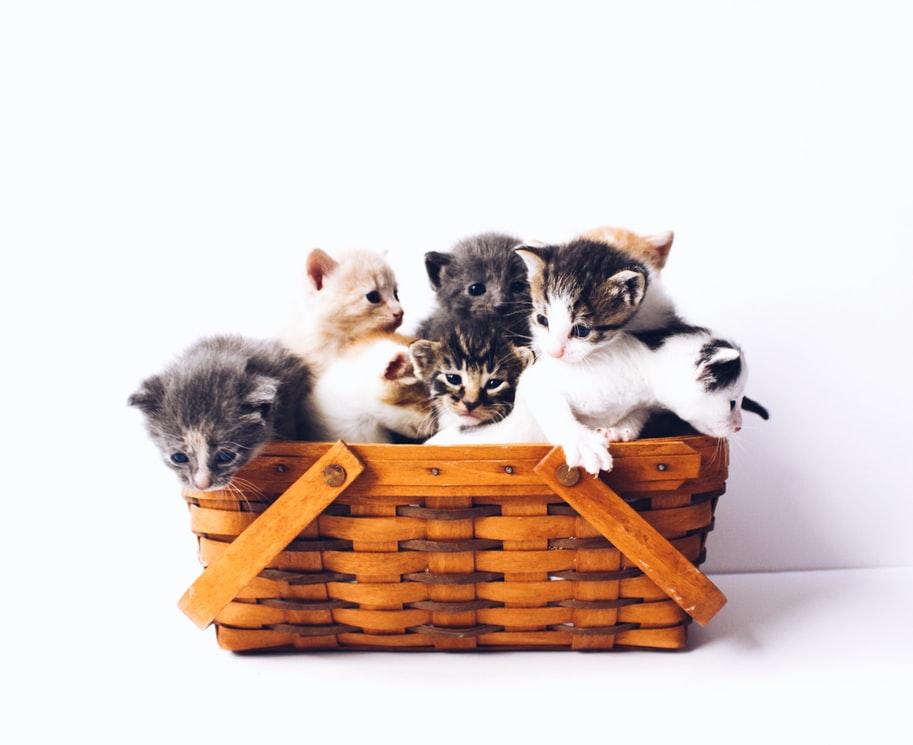 Tipps für die Einführung von Katzen