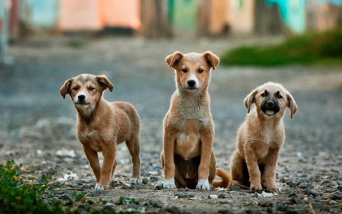 Töpfchentraining für Hunde - Die Grundlagen