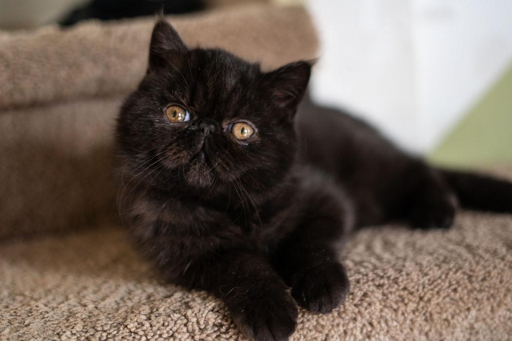 Trainiere deine Katzen oder Kätzchen mit positiver Verstärkung.